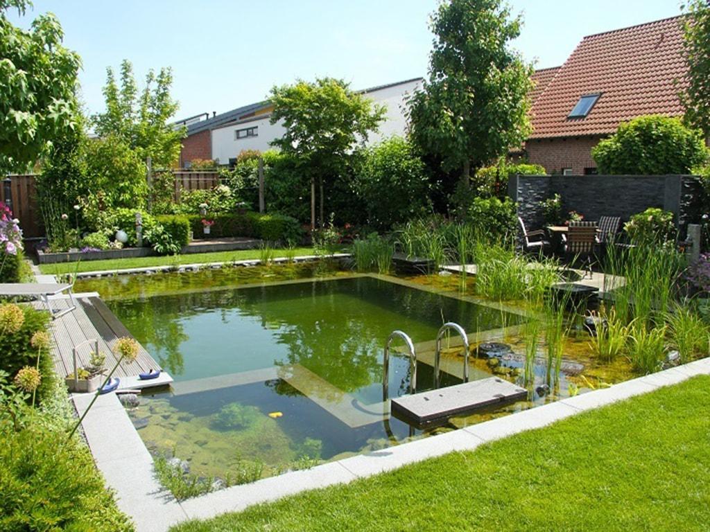 купить природный бассейн