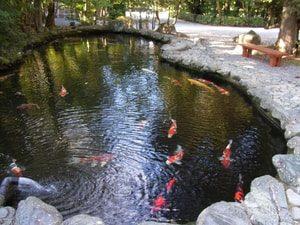 Бассейны для разведения рыбы